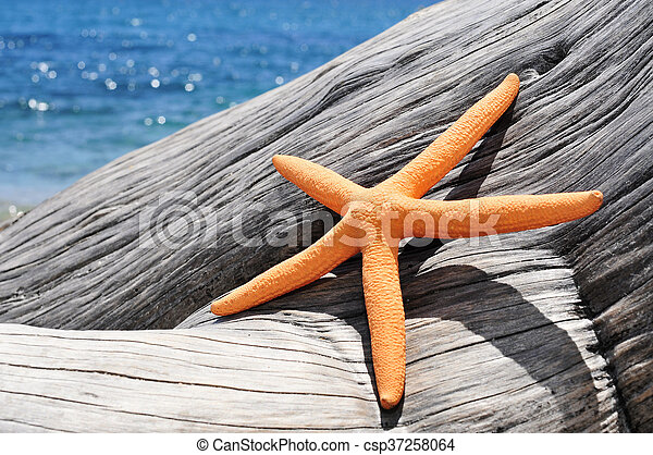 antigas, starfish, tronco árvore, laranja, washed-out, praia - csp37258064