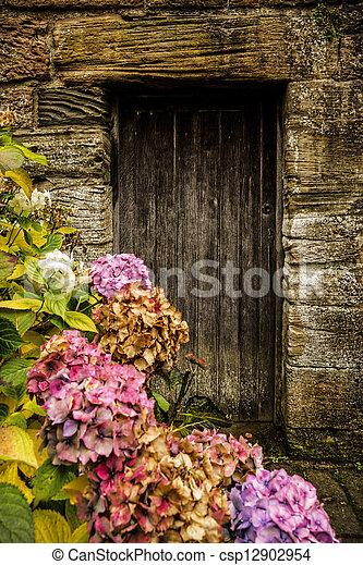 antikvitet, trä dörr, hortensia - csp12902954
