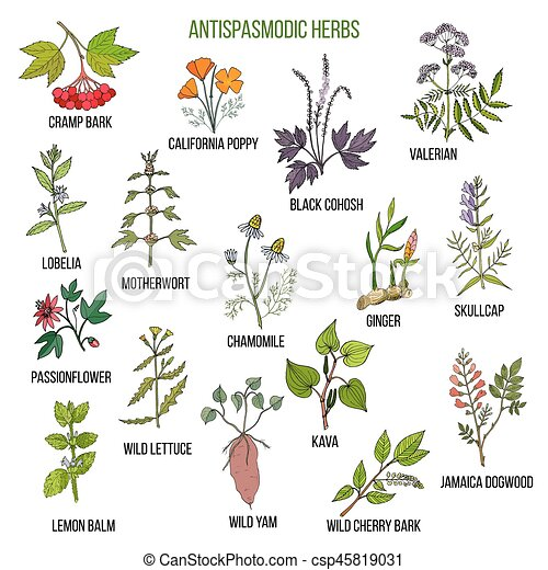 Antispasmodic herbs. Hand drawn set of medicinal plants - csp45819031