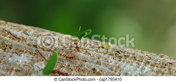 Ants Working On Tree To Carry Leafs