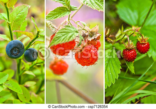 any wild berry from forest - csp7126354