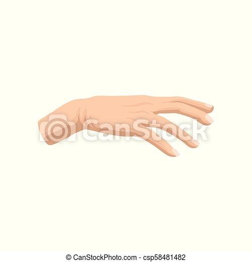 apartamento, salão, mulher, beleza, clássicas, cartaz, ou, mão, s, vetorial, anunciando, ícone, elemento, bandeira, manicure., homem - csp58481482