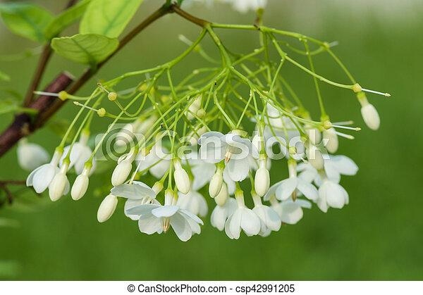 Apocynaceae - csp42991205