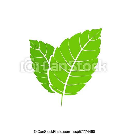 appartamento, aroma., natura, sano, mentolo, leaf., vettore, verde, mette foglie, erbaceo, fresco, menta, plant., menta verde - csp57774490