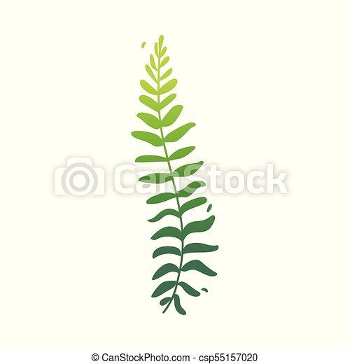 appartamento, pianta, astratto, felce, vettore, verde, icona - csp55157020