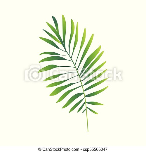 appartamento, pianta, astratto, felce, vettore, verde, icona - csp55565047
