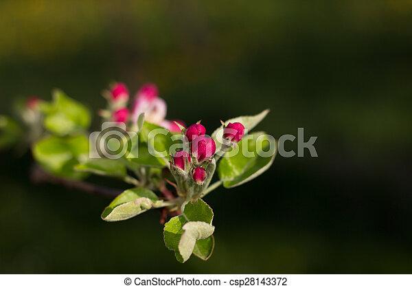 apple. - csp28143372