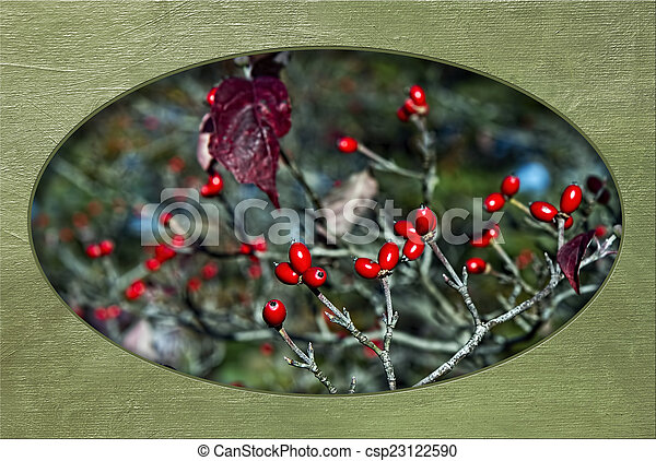 Apple Blossom Red Berries in Fall - csp23122590
