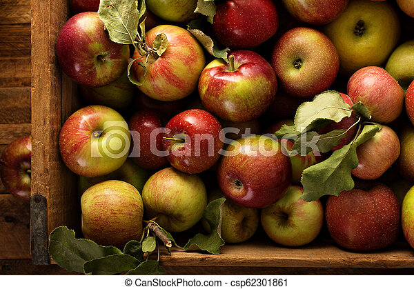 Apple harvest in a wooden crate - csp62301861
