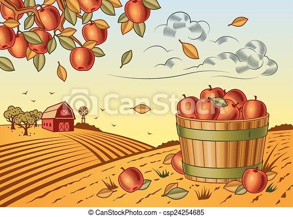 Apple harvest landscape - csp24254685