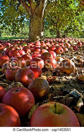 Apple Harvest - csp1453551