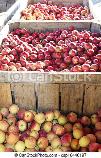 Apple Harvest - csp16446197