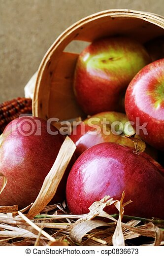 Apple Harvest - csp0836673