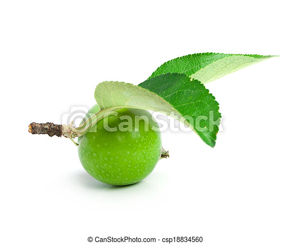 apple is green and two sheets on a branch are isolated - csp18834560