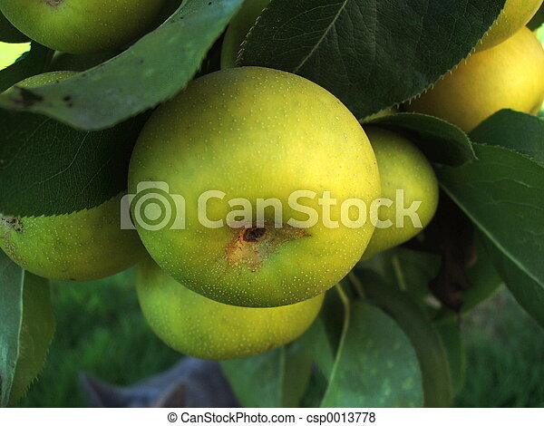 Apple Pears 1 - csp0013778