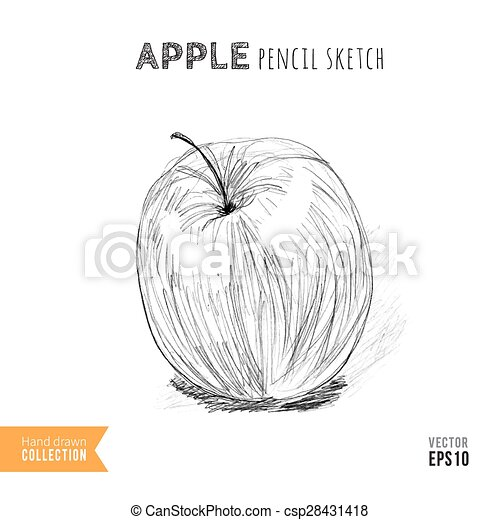 Apple pencil sketch csp28431418