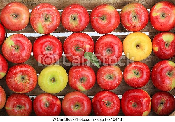 apple, red, yellow - csp47716443