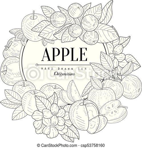 Apple Set Vintage Sketch - csp53758160