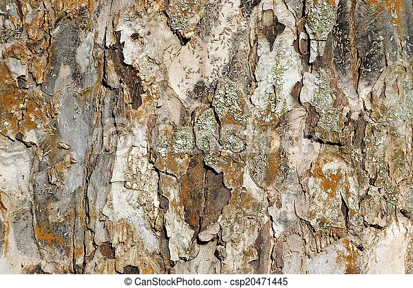 Apple Tree Bark Texture - csp20471445