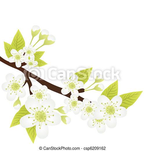 apple-tree branch  - csp6209162