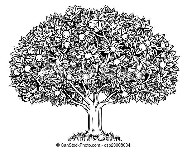 Apple tree  - csp23008034