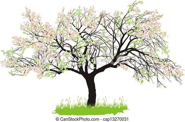 Apple tree in spring - csp13270031
