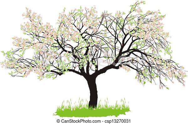 Apple tree in spring - csp13270031