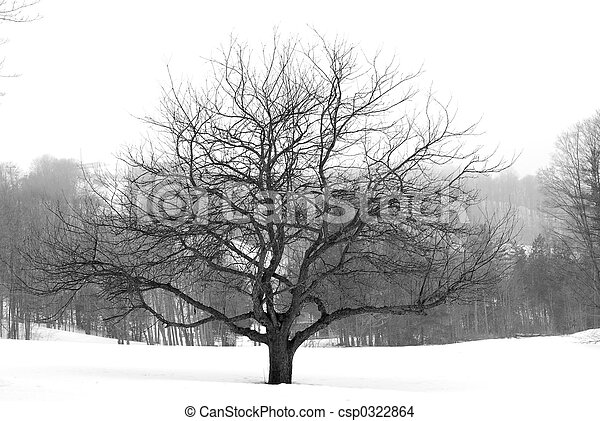 Apple tree in winter - csp0322864