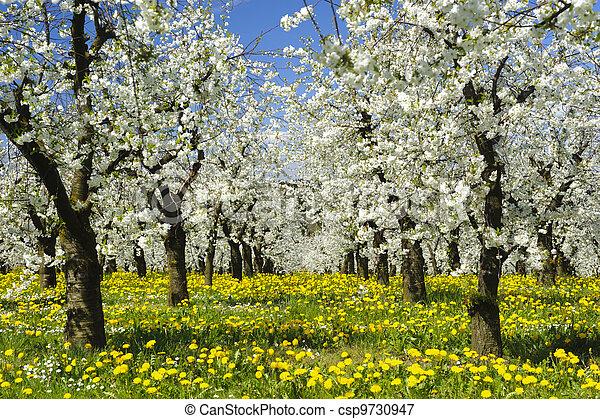apple tree - csp9730947