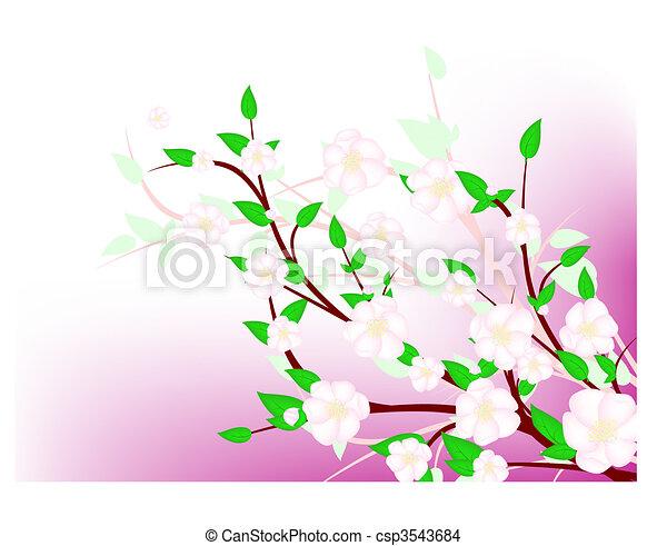 apple tree spring blossom - csp3543684