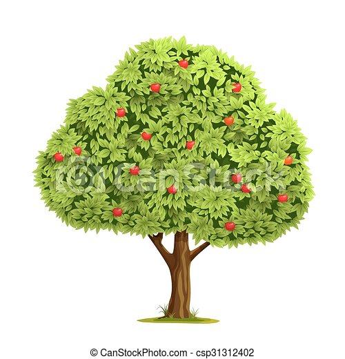 Apple tree with apple - csp31312402