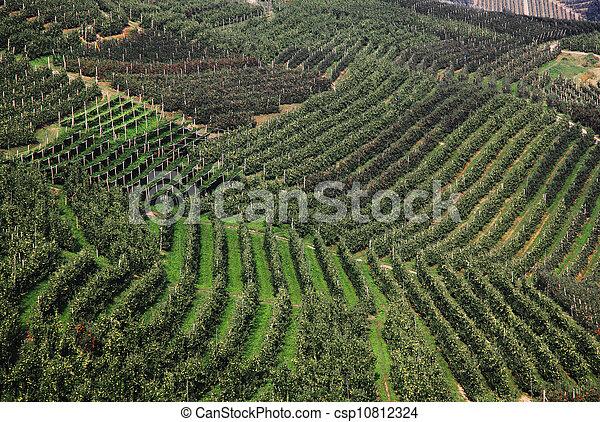 apple trees - csp10812324