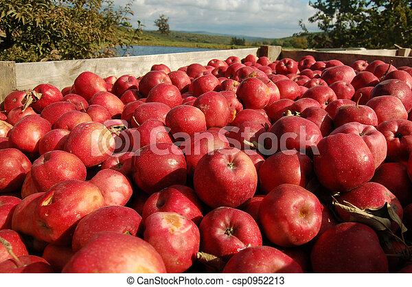 Apples in crate - csp0952213