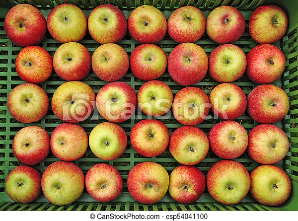 Apples set in rows - csp54041100