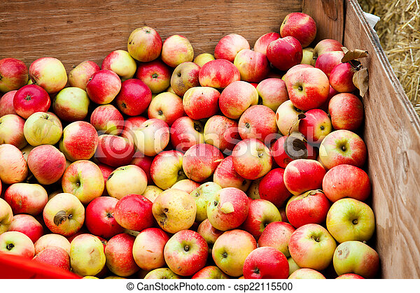 Apples - csp22115500