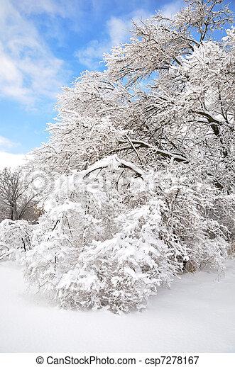 après, arbres, orage glace - csp7278167