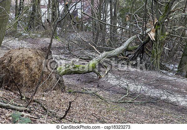 après, déraciné, arbres, orage - csp18323273
