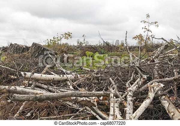 après, ouragan, arbres - csp68077220