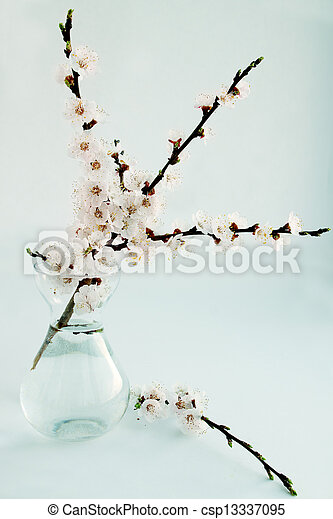 apricot in a glass vase - csp13337095