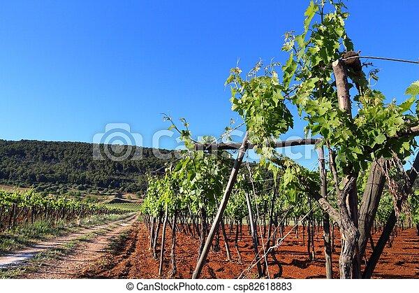 Apulia vineyard - csp82618883