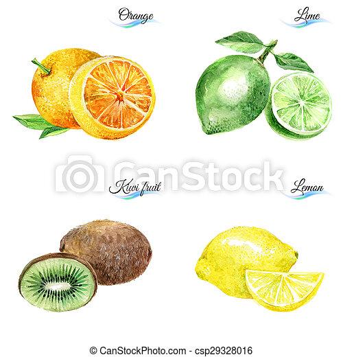 aquarela, frutas - csp29328016