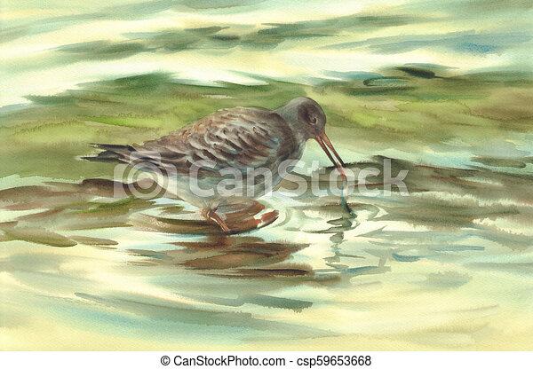 aquarela, pássaro, mar, pesca - csp59653668
