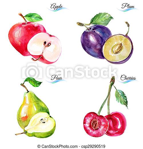 aquarelle, baies, fruits - csp29290519