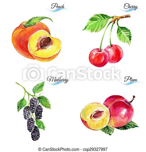 aquarelle, baies, fruits - csp29327997