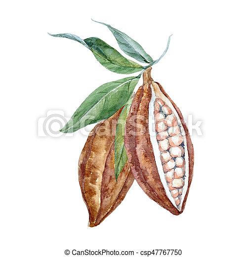 aquarelle, cacao, fruits - csp47767750