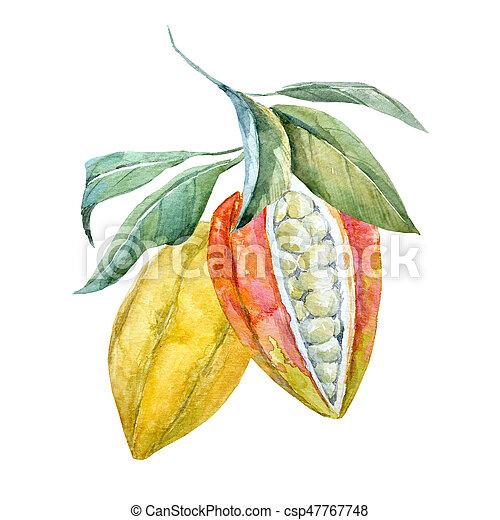 aquarelle, cacao, fruits - csp47767748