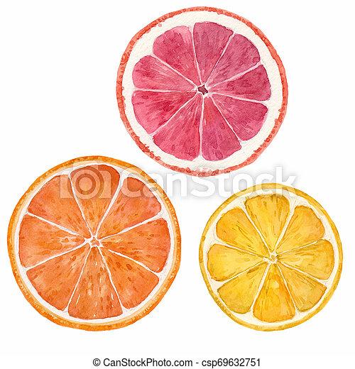aquarelle, citrus, illustration, fruits - csp69632751