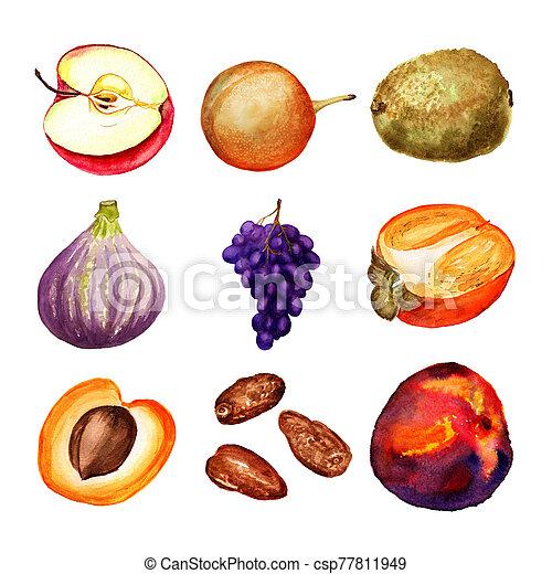 aquarelle, ensemble, fruits - csp77811949