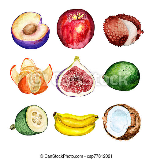 aquarelle, ensemble, fruits - csp77812021