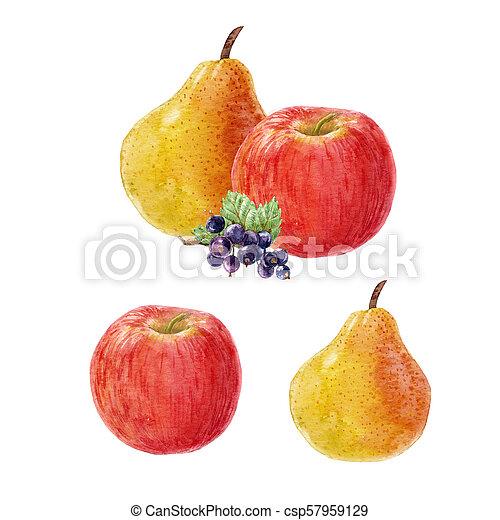 aquarelle, fruit, composition - csp57959129